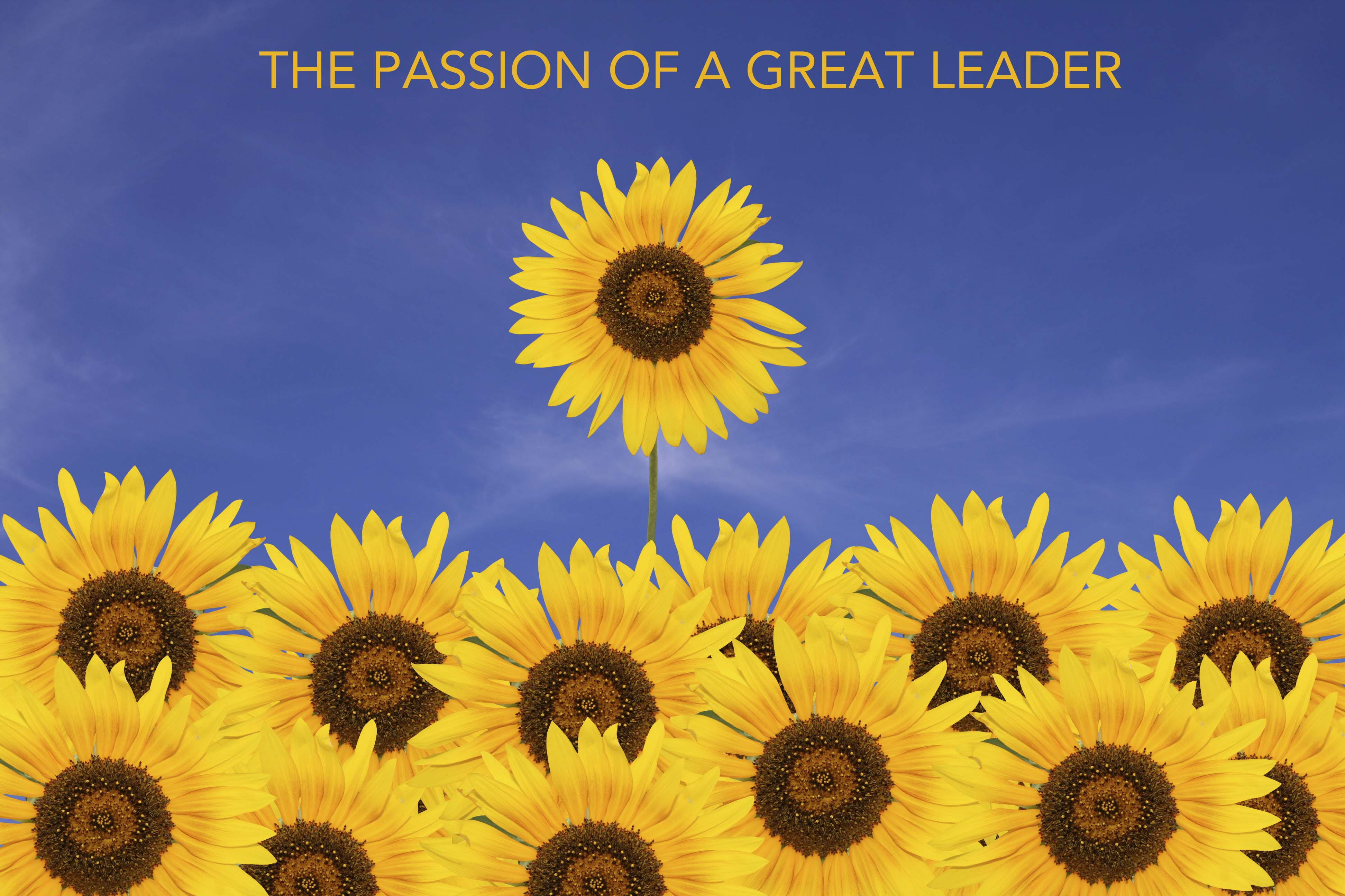passion of great leader